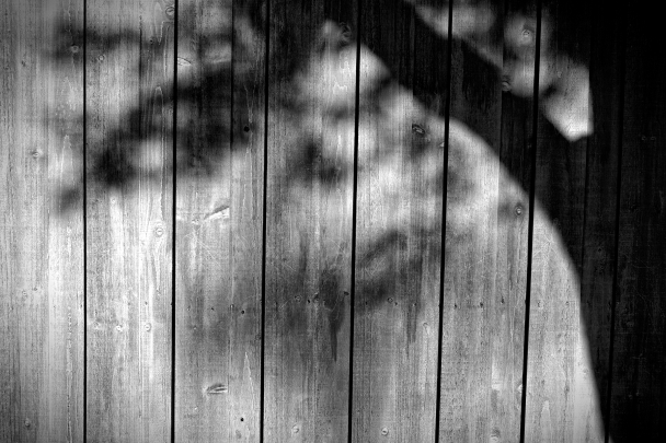 Shadow On Fence (111 of 365)
