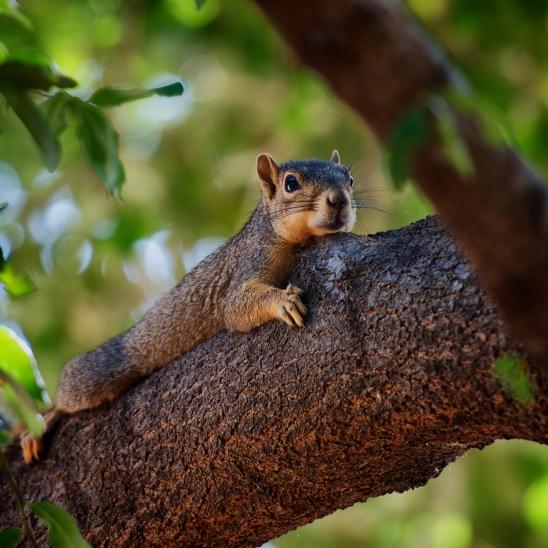 Tree Hugger (162 of 365)
