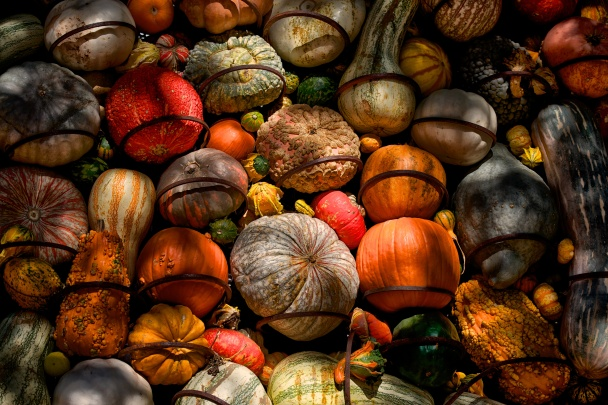 Gourd Orgy (211 of 365)